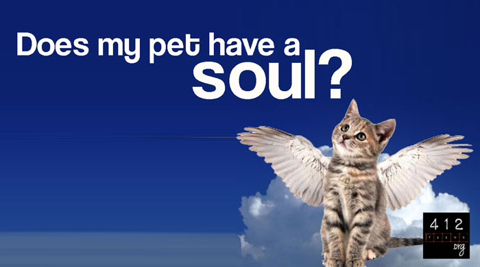 Will My Pet Go To Heaven Do Animals Have Souls